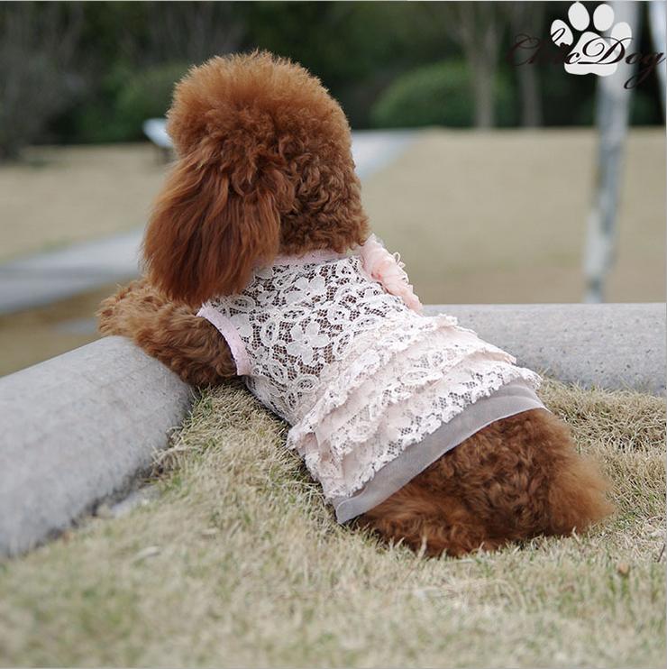 váy ren mùa xuân , mùa hè cho cún cưng