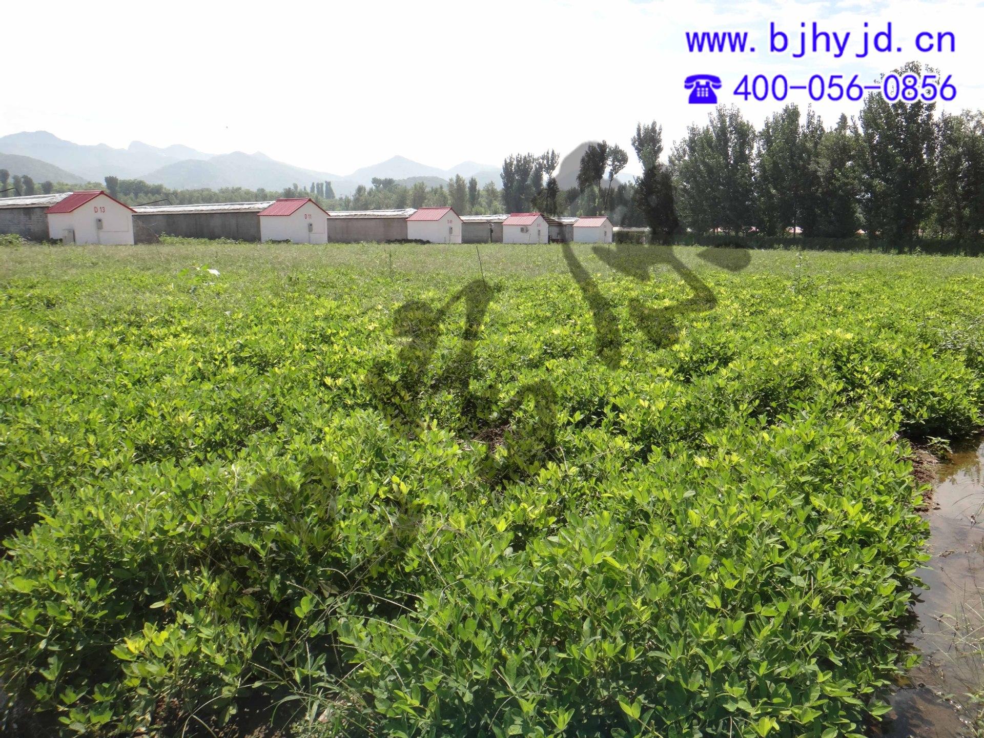 Nguyên liệu sản xuất phân bón Peanut fertilizer organic and inorganic fertilizer top dressing (full