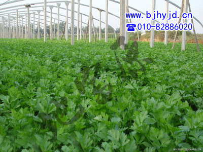 Nguyên liệu sản xuất phân bón Celery specialty fertilizer