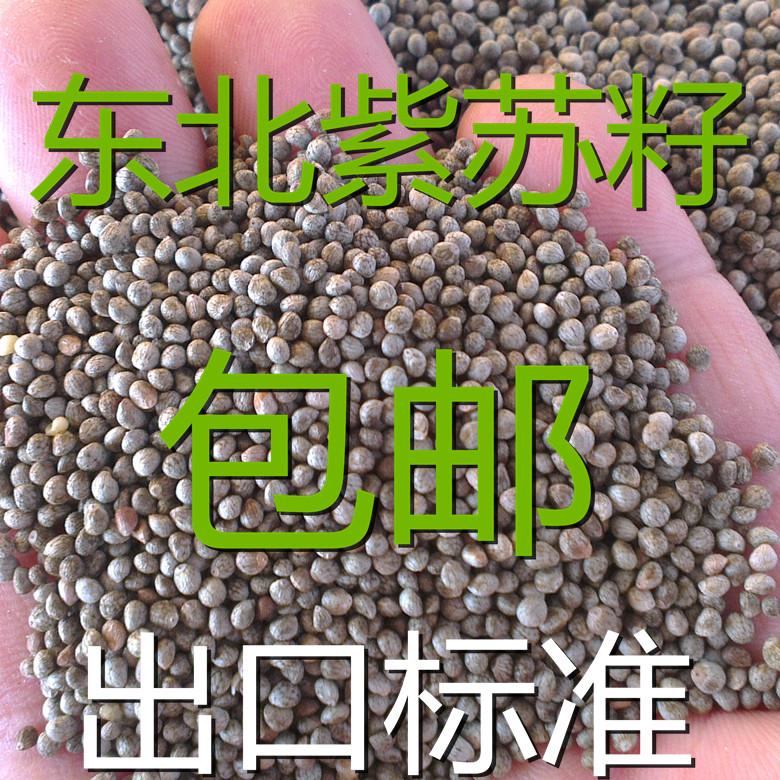 NLSX dầu thực vật   hipping goods northeast perilla seed has a dark grey black perilla perilla seed