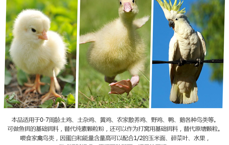 Thức ăn cho gà Chinese animal feed pellets chick chicken feed premix chicken meat, eggs, chickens ea