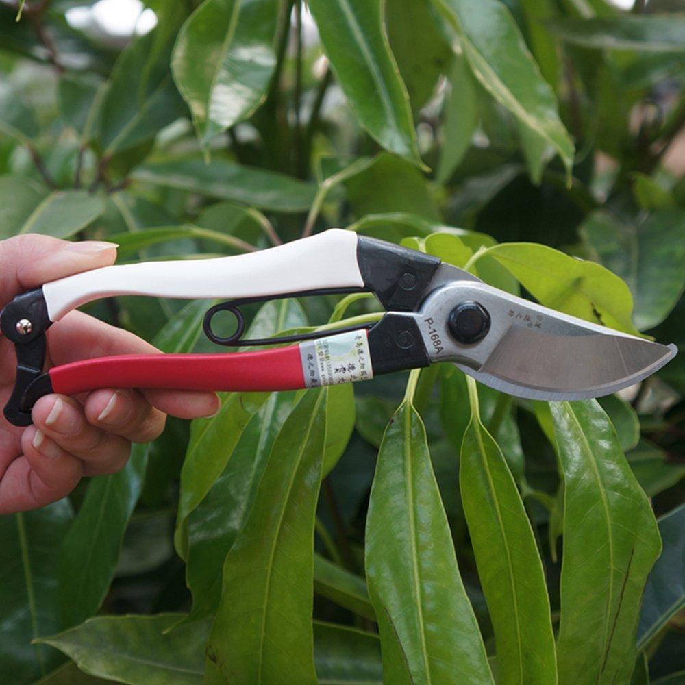 Thế kỷ P-168A 168 tỉ pratensis tay cắt / chi cắt / cắt / cắt định / cắt / vườn kéo P-168A