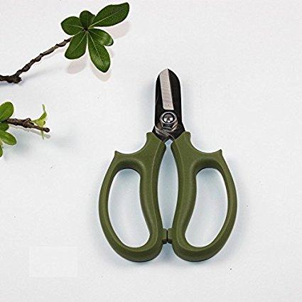 doruik  Nhà làm vườn strictum cắt cắt bán hoa cắt hoa kéo cắt cành thô cắt cây ăn quả cắt (xanh lá c