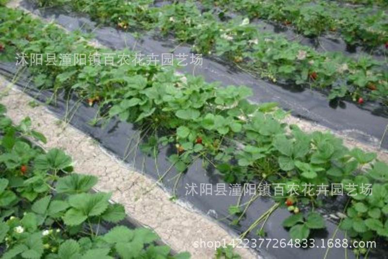 Nông nghiệp phim Nhà sản xuất bán buôn nông nghiệp nhựa phim đen trắng đen tấm phủ tấm phủ làm cỏ ch