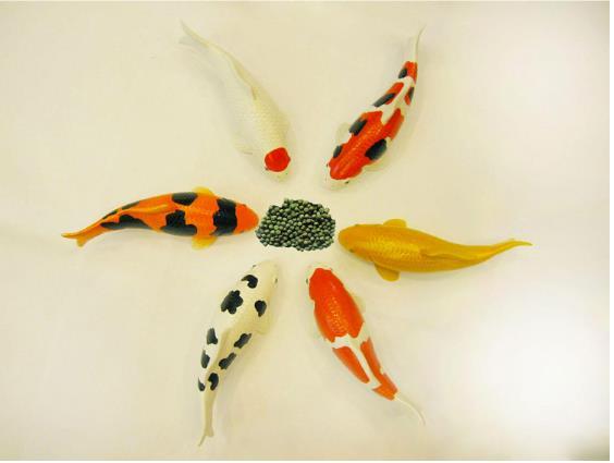 INCH-GOLD    Thức ăn cho cá ăn cá Koi là tiền bạc tăng lương trong cơ thể tăng Diễm cá hạt 5KG rubru