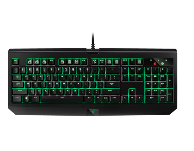 Razer Bolyeria multocarinata (Bolyeria multocarinata) blackwidow Ultimate nhện góa phụ đen Ultimate