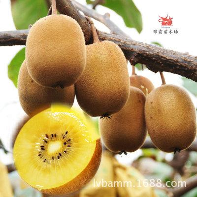 Cây giống Kiwi trái vàng