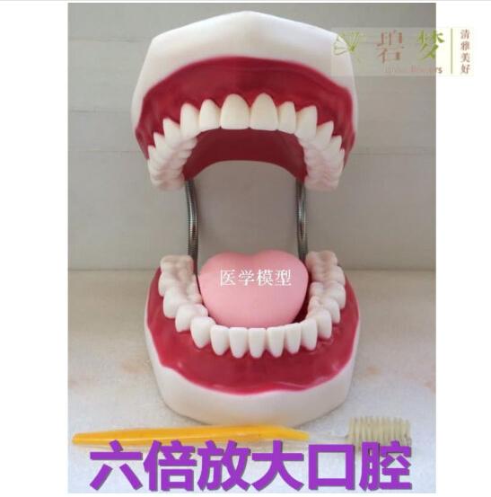 Mô hình chăm sóc y tế đánh răng miệng hàm răng lớn hướng dẫn cụ giảng dạy trẻ em bộ răng răng.