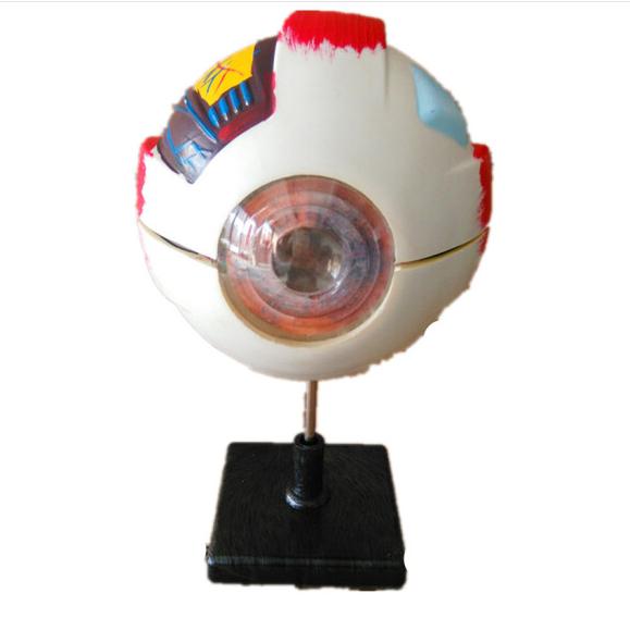 Lotso 39054 mô hình cấu trúc mắt lớn, 33205 mô hình dạy y khoa giải phẫu mắt chút ống nhựa ko, dụng
