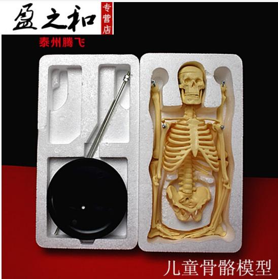Trẻ em người mẫu xương 39051 xuyên qua mô hình sinh vật mô hình thiết bị giảng dạy y học.