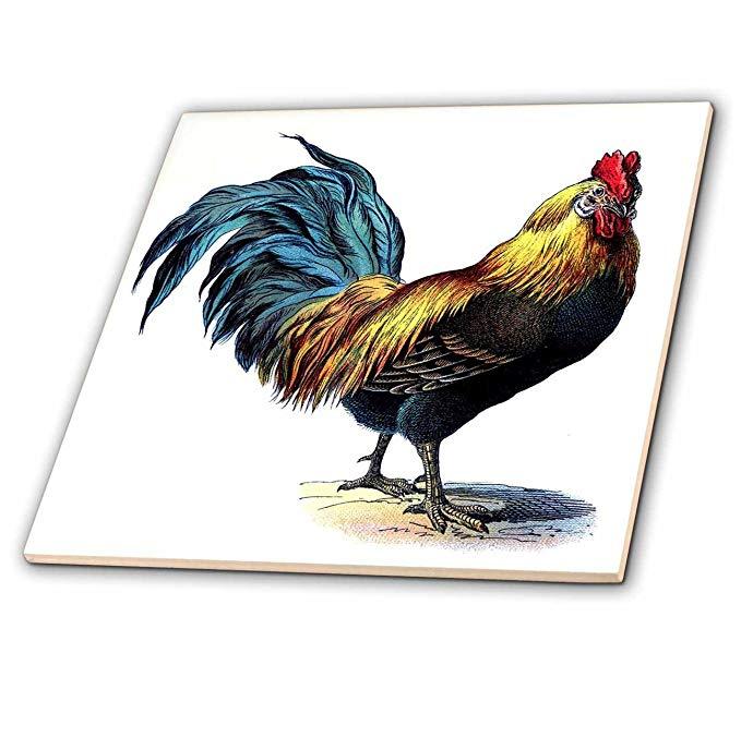 Hình ảnh về Florene Victorian - Con gà trống màu xanh vàng đỏ Victoria - Ngói