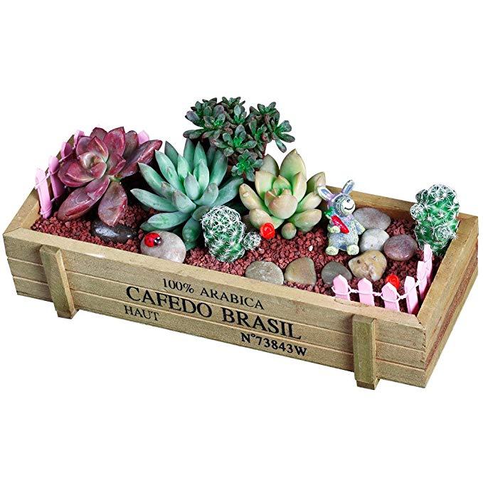 Vườn cây thu nhỏ trong hộp gỗ TMCB