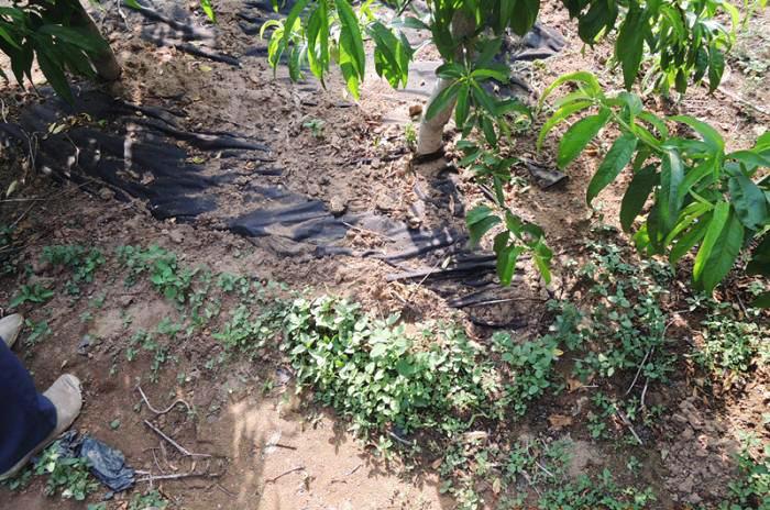 Nhà sản xuất bán buôn vải thổ công nông nghiệp tấm che dưỡng ẩm đến từ cái mền.