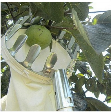 ZUIBO Dụng cụ nông nghiệp Máy hái trái cây bằng kim loại Máy hái trái cây cao độ Công cụ hái trái câ