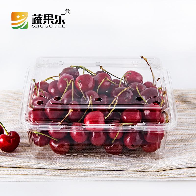 SHUGUOLE Thị trường bao bì nhựa Le tươi 500M dùng một lần trái cây trong suốt hình hộp trái cây hình