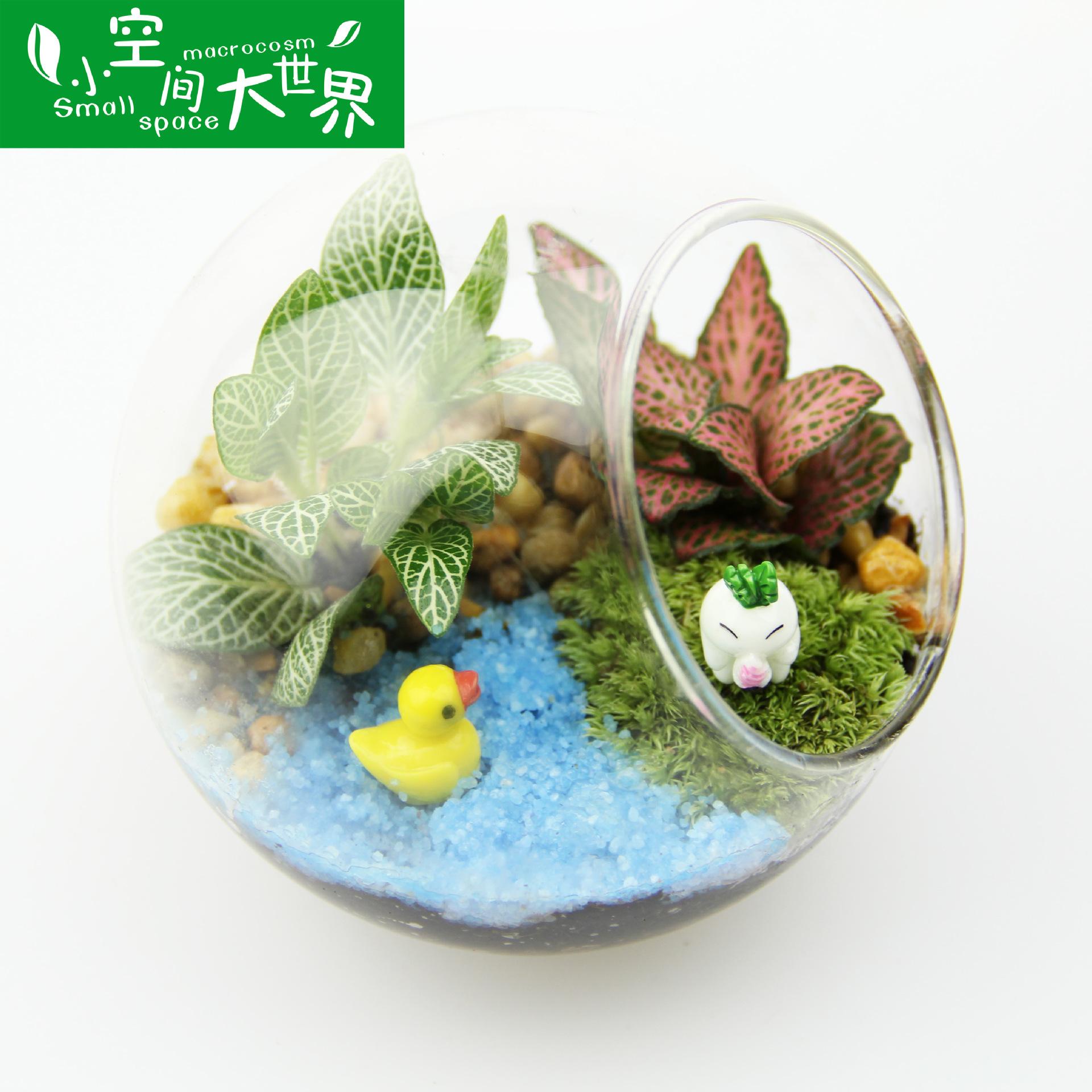 XKJDSJ Cảnh quan Mini Quà tặng sáng tạo Quà tặng rêu phong cảnh sinh thái chai thành phẩm Bộ chai xi