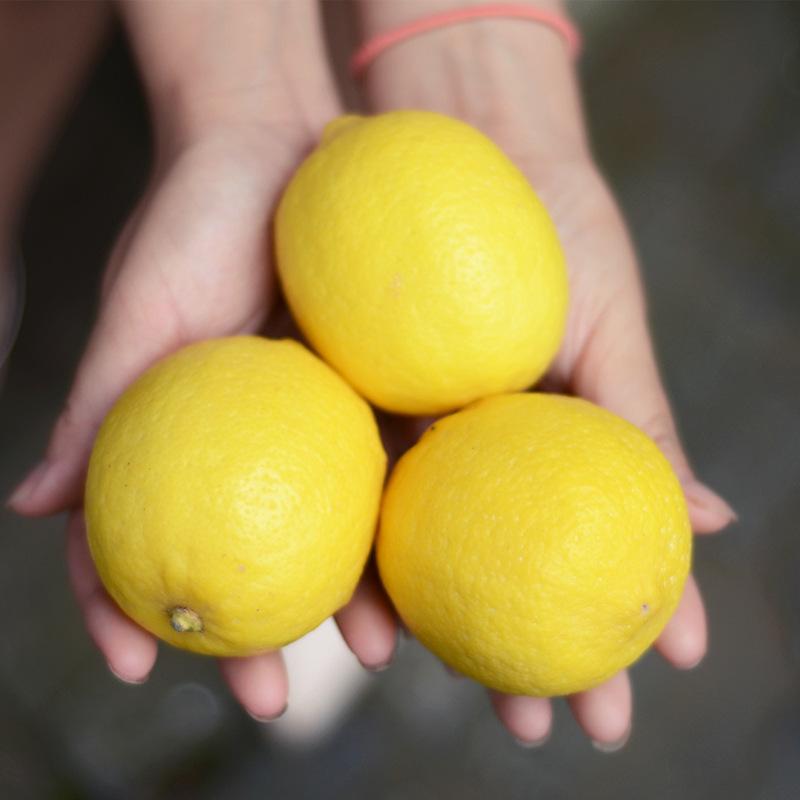 Trái cây(kiwi,táo) Quả chanh tươi 5 kg quả chanh vàng hiện đã được hái
