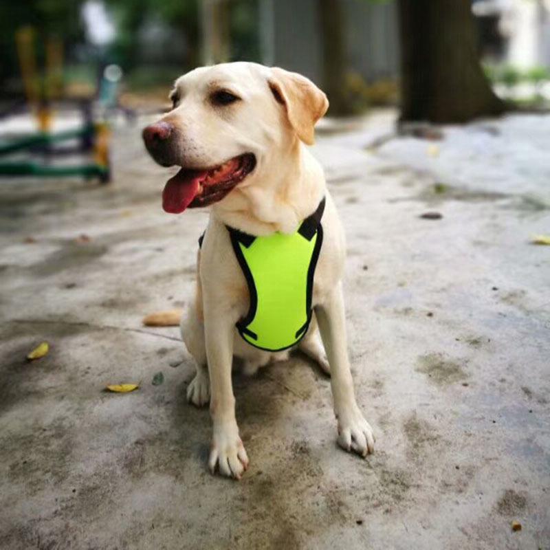 Dây đai an toàn cho chó dây đeo ngực .