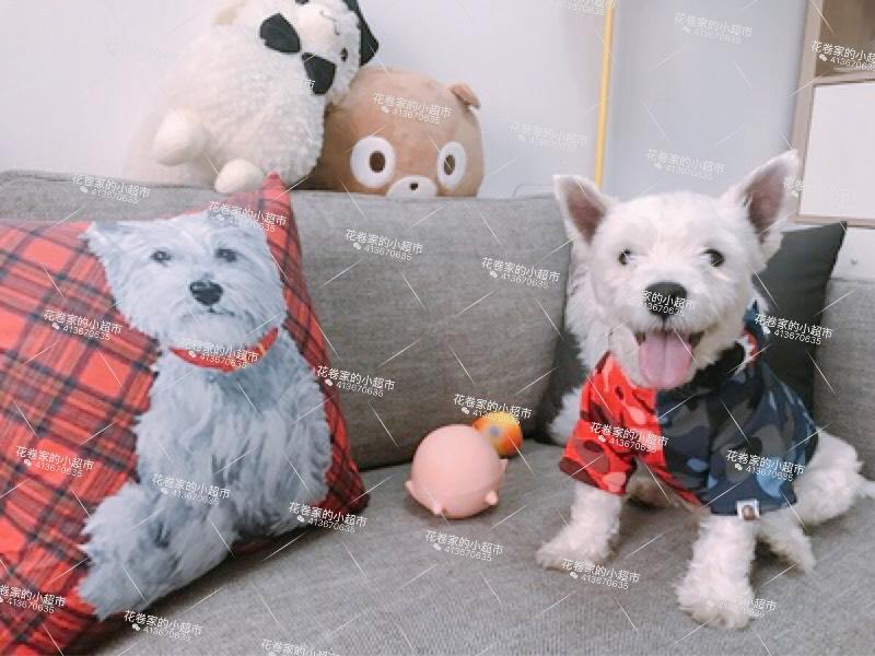 Gối tựa lưng Con chó đáng yêu quanh West Highland West Highland White Terrier, phòng ngủ đệm êm nệm,
