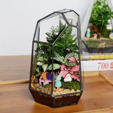 Sáng tạo mini rêu vi cảnh quan hình học nhà kính hoa sinh thái