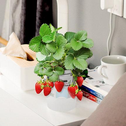 Cảnh quan Mini Mini sáng tạo trẻ mẫu giáo trồng cây nhỏ chậu hoa tự làm trồng hoa trong nhà nông dân