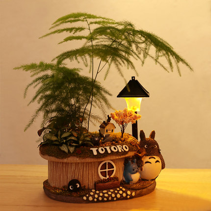 Zilewan Cảnh quan Mini Cây may mắn trong chậu cây cảnh măng tây nhỏ trong nhà thanh lọc không khí m