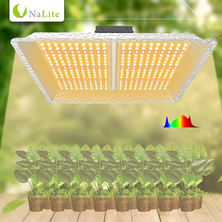 Đèn kích thích sinh trưởng cây trồng trong nhà kính .