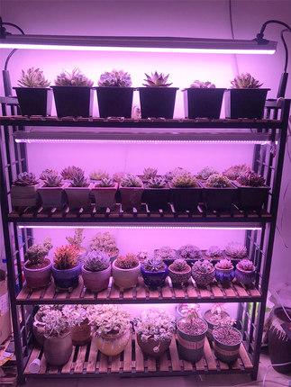Đèn kích thích sinh trưởng cây trồng mọng nước .